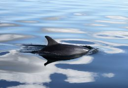 New publication: Bunbury's dolphins has historically acted as a 'source' population